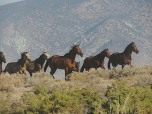 Do horses see colors or are they color-blind?