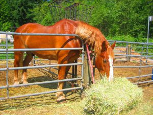 How to choose the best food for your horse?