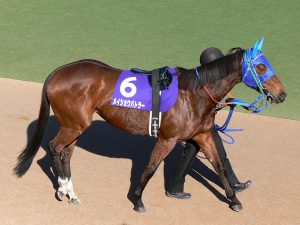 Tips on betting on horse racing for beginners