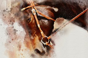 The Most Adored Horse Breeds