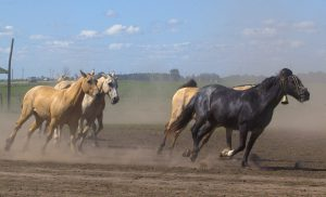 5 Fastest Horse Breeds