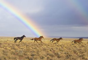 Amazing Facts about Wild Horses