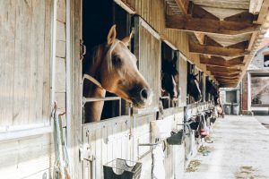 The 5 Biggest Issues Within the Horse Industry